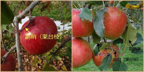 Photo_20201120132801